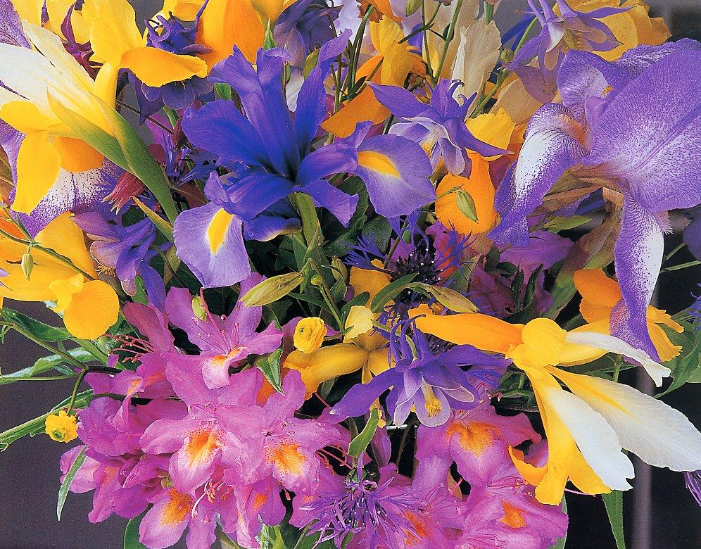 Fiori colorati per voi fiori di pensiero poesie for Fiori stilizzati colorati